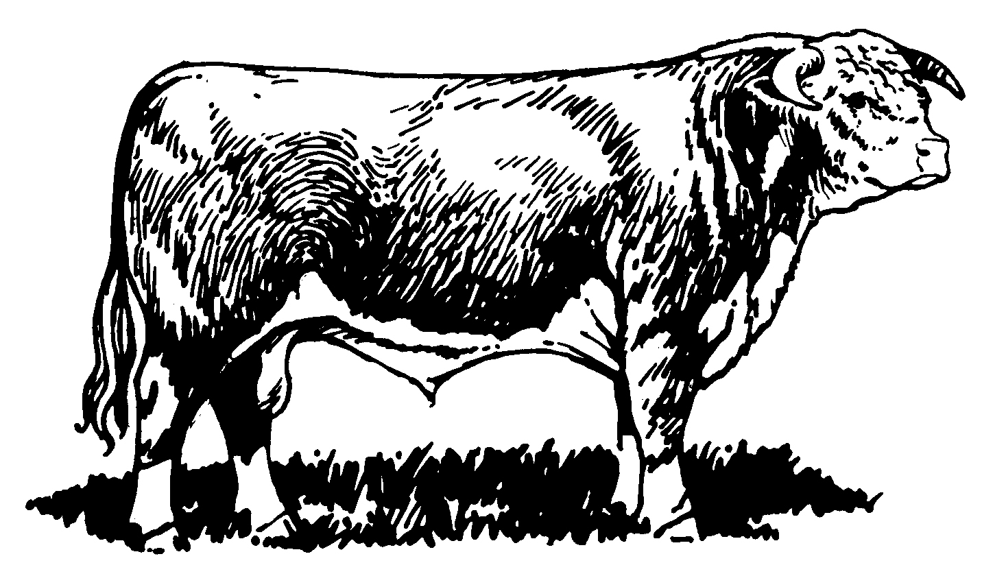 The Summit Reno >> American Hereford | » Art Library