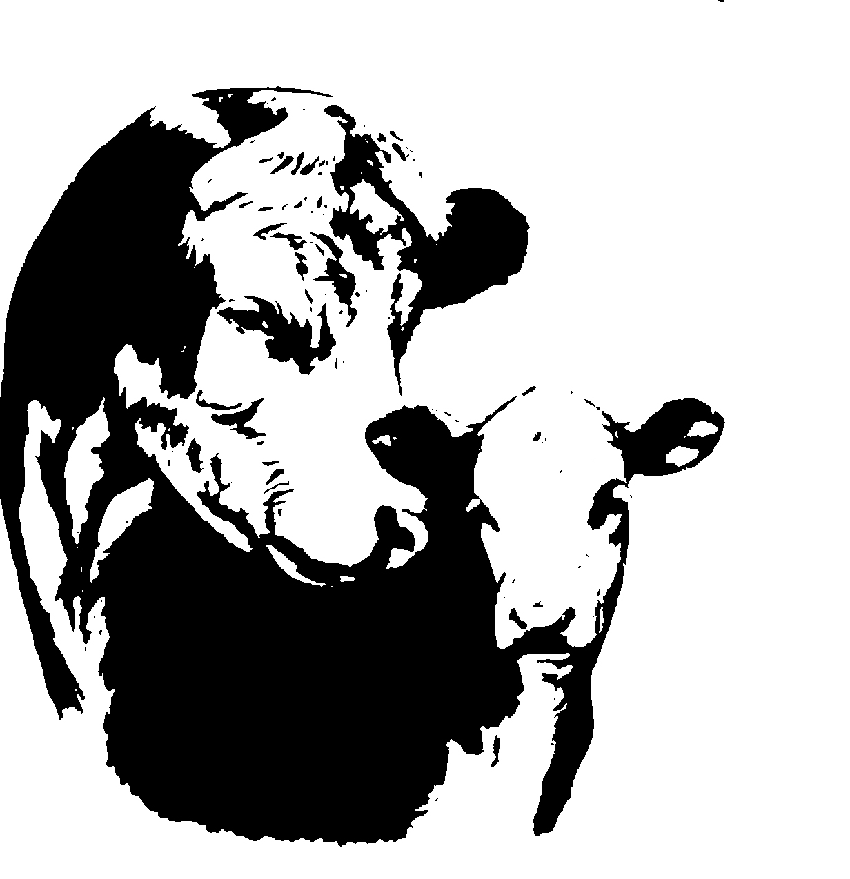 American Hereford | Art Library - American Hereford for Cow And Calf Clipart  17lplyp