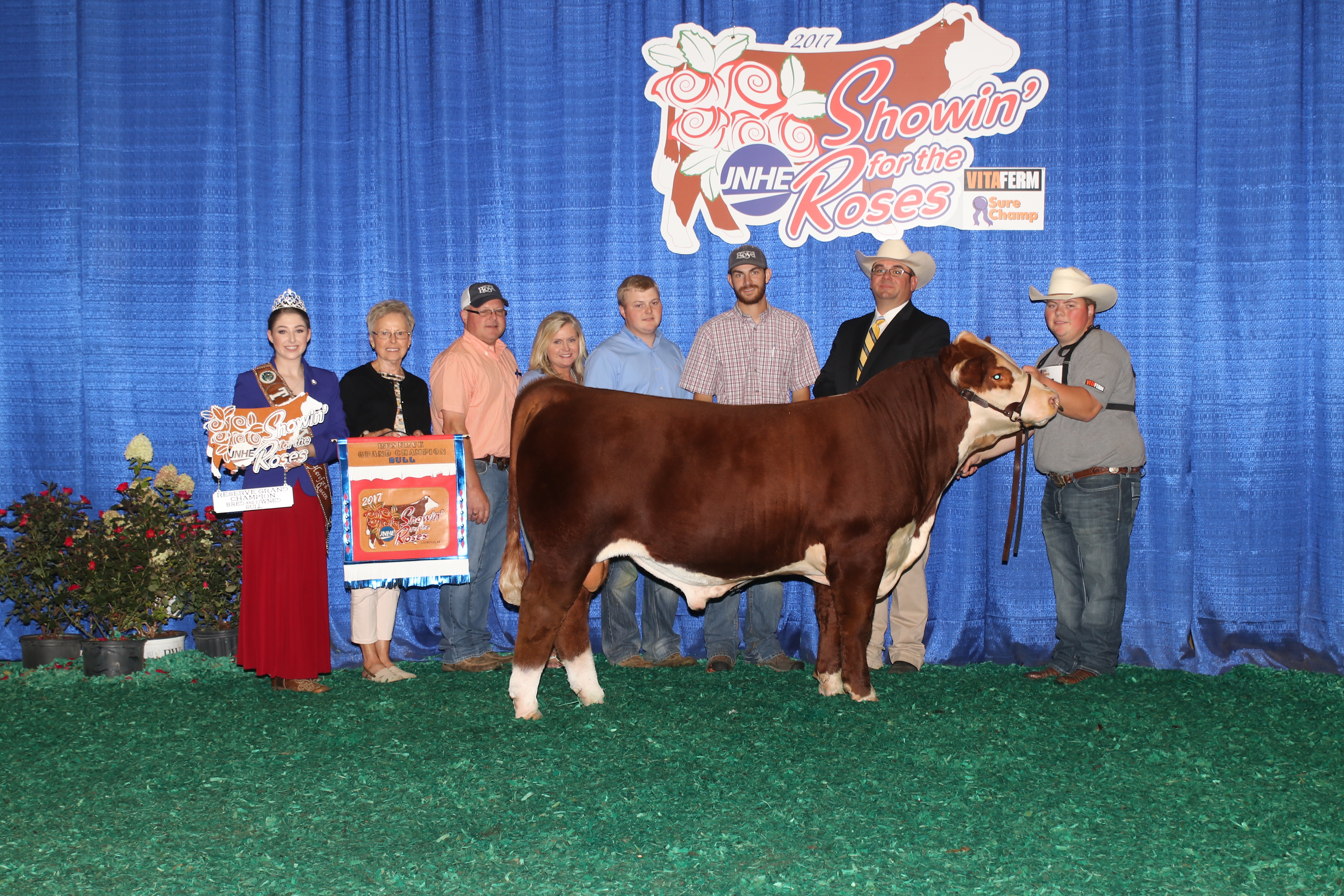 American hereford results american hereford boyd 31z blueprint 6153 malvernweather Images