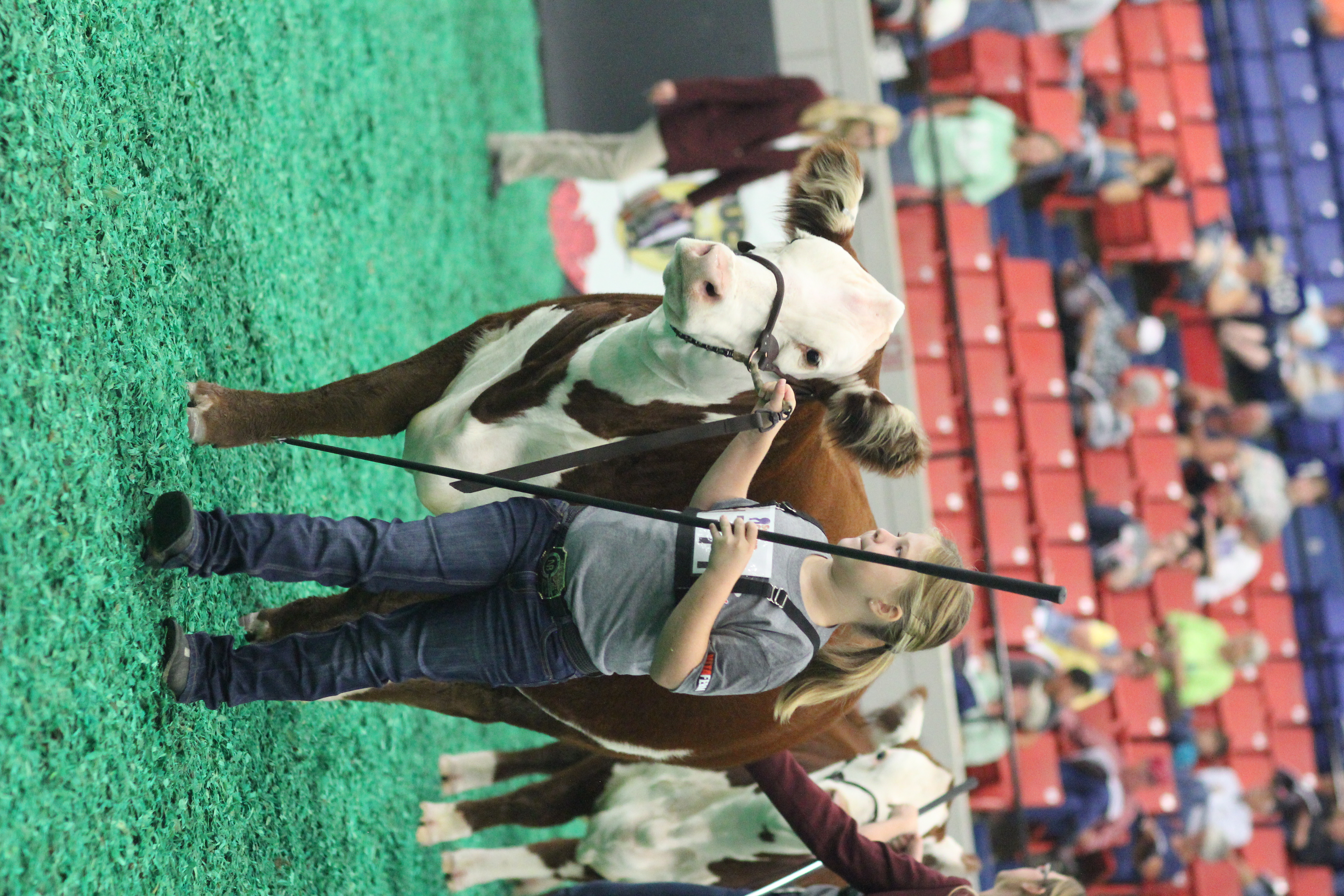 hereford women The hereford youth foundation of america (hyfa) was established in 1986 and   transfer of assets from the american hereford women, tremendous breeder.