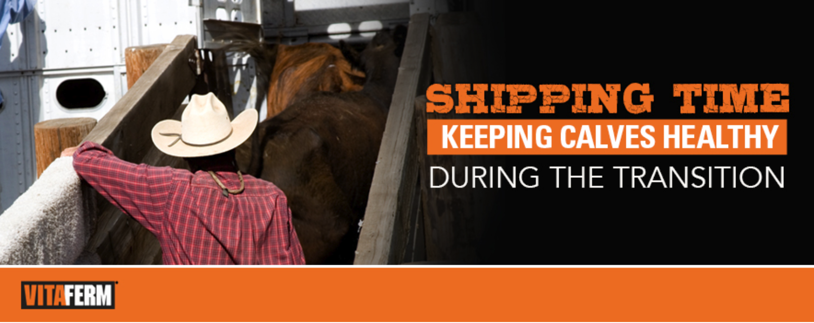 It's Shipping Time: Keep Calves Healthy During the Transition