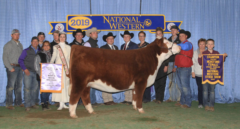 Denver Stock Show 2020.American Hereford National Western American Hereford