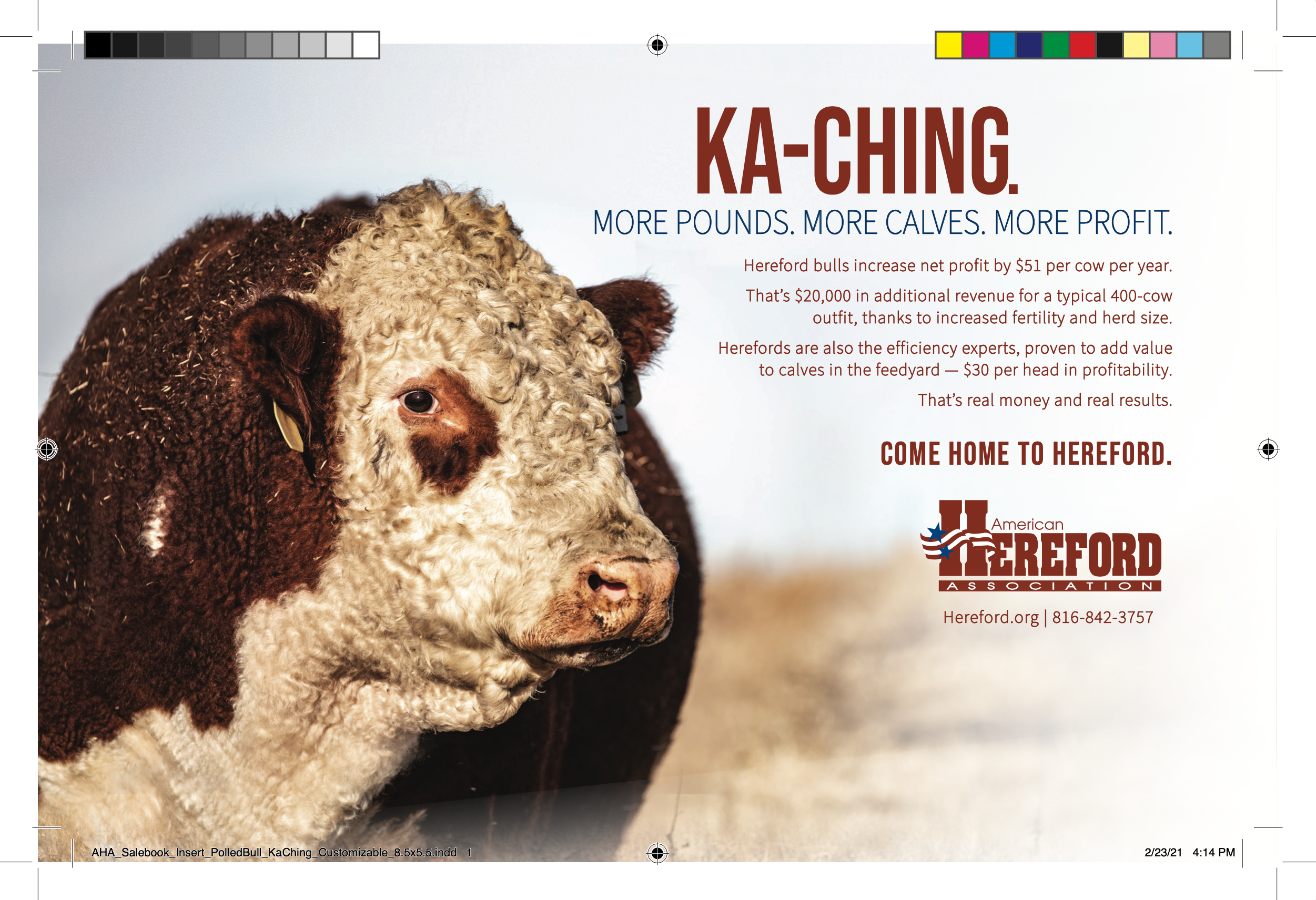 'Polled KaChing' Half Page Insert — With Bleeds